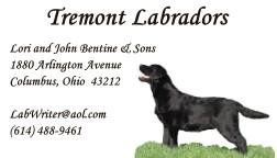 Tremont_Labradors
